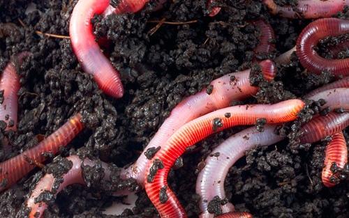 01_diy-earthwormfarm_960x600
