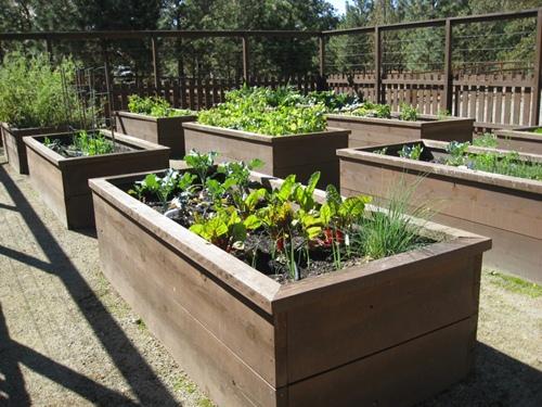 Organic-Raised-Garden-Bed-Design-Inspiration-and-Design-Ideas-garden-design-using-raised-beds--1024x768